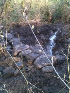 granite stepping stones on woodland path