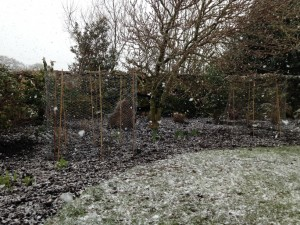 relandscaped border with rabbit protection