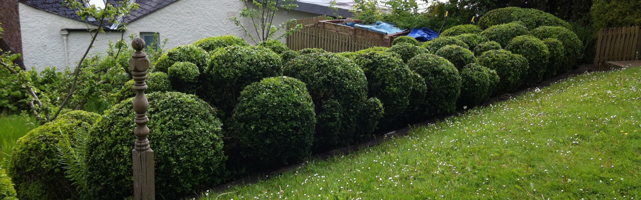 Sculptural-hedge-2-Totnes-1280